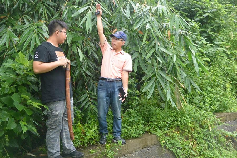 里民盼架設電圍網,但專家指出一旁的樹木、竹葉若不清除,可能成為獼猴的跳板。(巫靜婷攝)