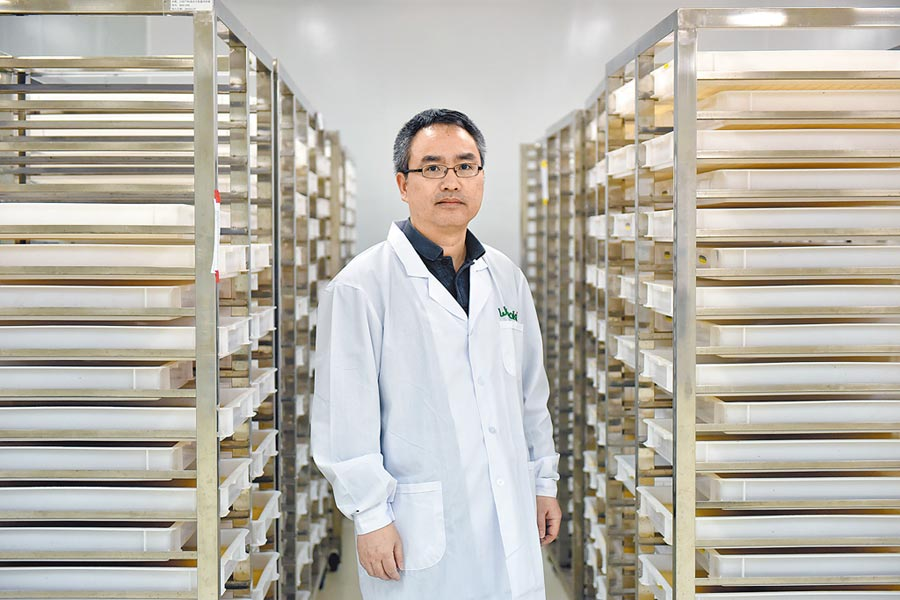 奚志勇教授在「蚊子工廠」的幼蟲飼養區裡。(新華社資料照片)