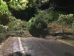 彰化田中中南路赤水崎 土石坍方路樹阻斷通行