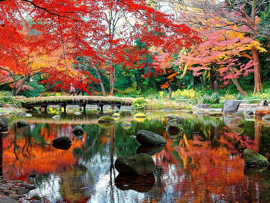 赴日賞楓是國人秋季最喜愛的主題旅遊