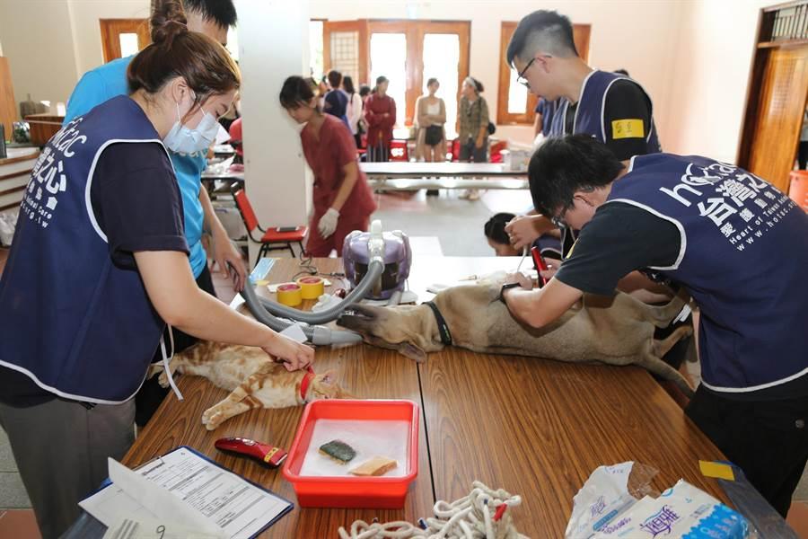 嘉義縣政府6月1日至8月31日辦理「動物關懷月」,免費替犬貓注射狂犬病疫苗。(嘉義縣府提供)