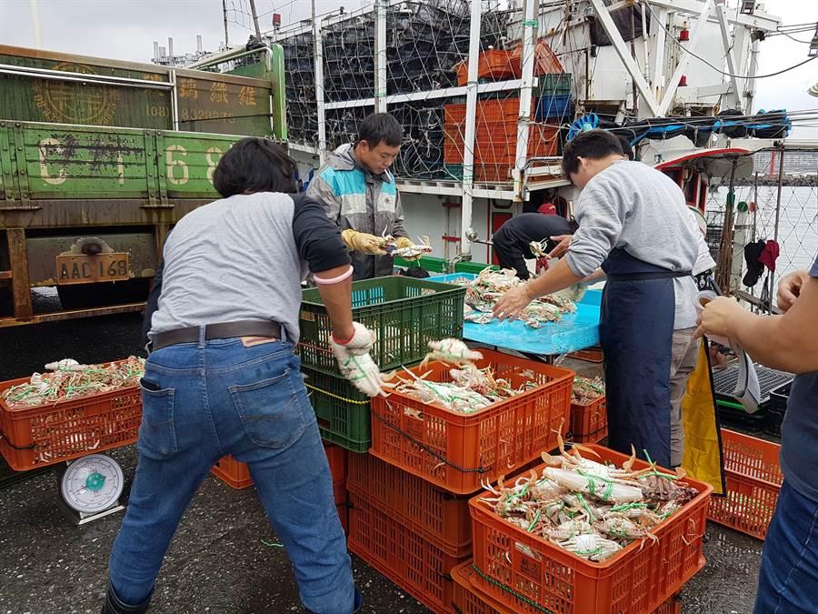 捕蟹船進港後裝卸萬里蟹。(圖取自新北市漁業處官網)