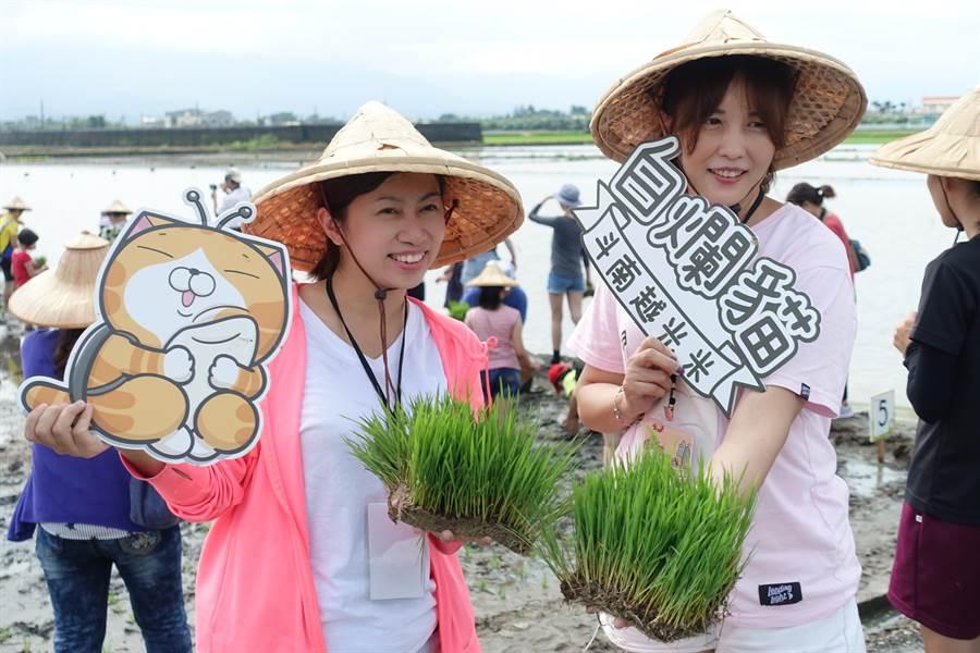 雲林縣斗南鎮農會稻田彩繪的圖案是白爛貓。(許素惠攝)