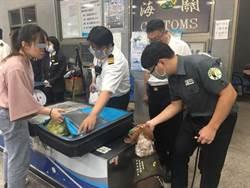 菲國疑爆非洲豬瘟 明起入境手提行李全面檢查