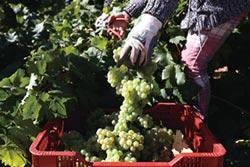 葡萄酒的氣候經濟學