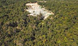 亞馬遜雨林濫伐