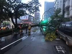 強降雨威力大 中市西屯老樹倒地壓車
