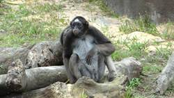 動物園「熱帶雨林區」藏奧秘!綠色植栽成小傢伙爭奪區