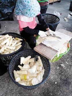 農委會鼓勵古坑筍農 進市場拍賣