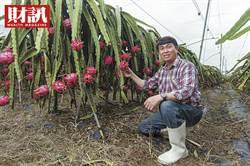 台灣農產品進軍東奧商機的祕密武器