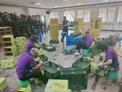 麻豆、下營文旦上市了 認明產地團體標章消費有保障