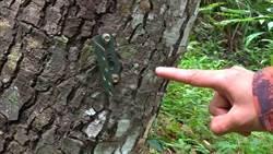 誰偷的?小熊監測器剛裝就被偷走