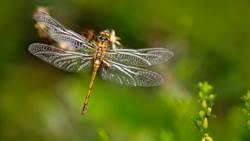 以蜻蜓為師  下一代飛彈將更精準