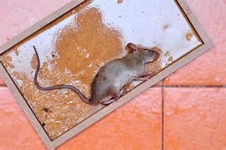 黏鼠板驚變動物園 網:生態豐富