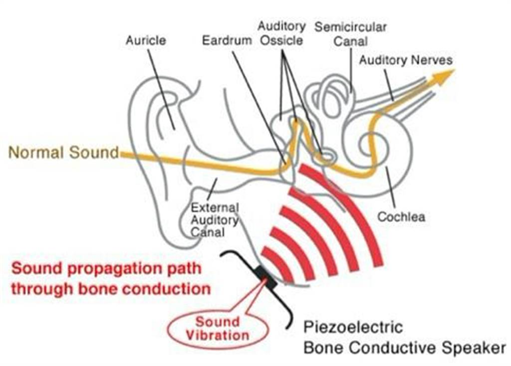 「骨頭耳麥」的原理,聲音從下顎骨傳入,直接振動內耳的聽覺系統。(圖/網路)
