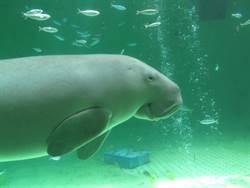 夏遊日本三重!松阪牛壽喜燒、水族館遇見「美人魚」