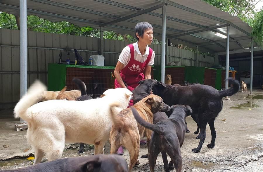 「莊媽媽狗園」收養2百多隻流浪狗,負責人莊雪玉獨自籌錢購買狗飼料、帶狗兒看醫生、打疫苗。(張妍溱翻攝)