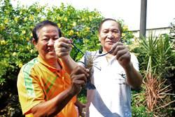 打破潮州特色 破億泰國蝦驚艷登場