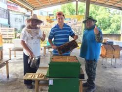 與蜂共好 明德社區養蜂引領生態教育