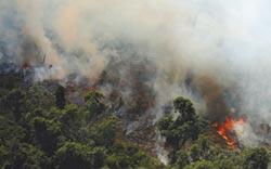 亞馬遜雨林 今年野火逾7萬起