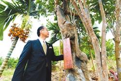 百年咖啡樹 孫子來台立碑