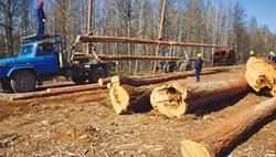 陸保護森林下重手 禁止商業採伐