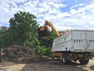 園藝好幫手 中市廢樹枝木屑免費領取