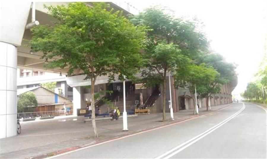 新北市汐止火車站周圍移植前路樹。(葉書宏翻攝)