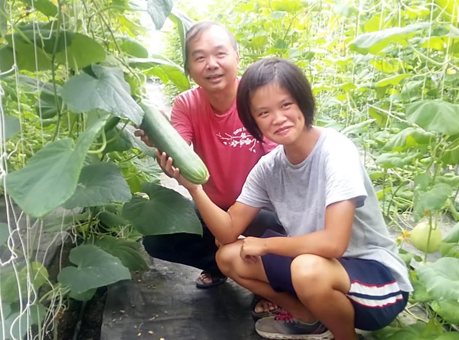 雲林縣培育農業人才,業師謝萬來教導高職學生王佩茹種出優質有機胡瓜。(許素惠攝)