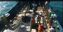「白鹿」來前趁亂捕魚 陸漁船狡猾切斷電路拒捕