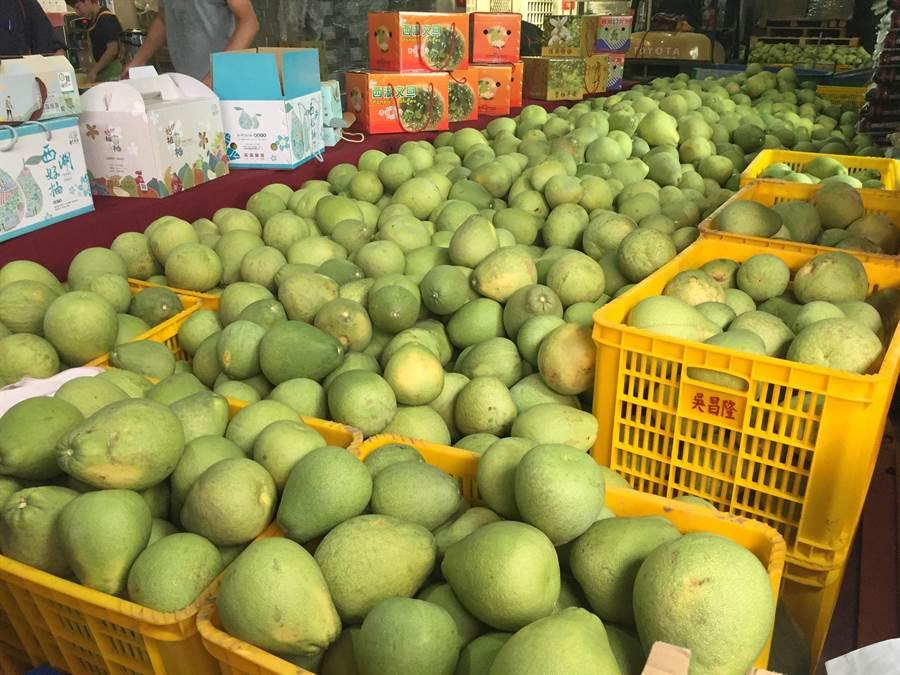西湖文旦柚上市,今年產量未受氣候影響,品質甜度佳。(巫靜婷攝)