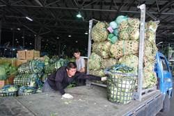 蔬菜需求量大 菜價大約半月後才會降