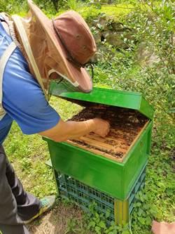 維護森林生態系平衡 明德社區復育野蜂有成