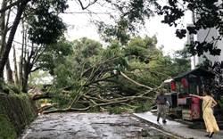白鹿過境日月潭颳10級風 環湖公路路樹倒伏滿目瘡痍