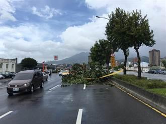 白鹿強風吹倒北投路樹  小客車遭砸凹
