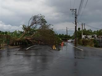 白鹿颱風風雨太強 八德路樹被吹倒