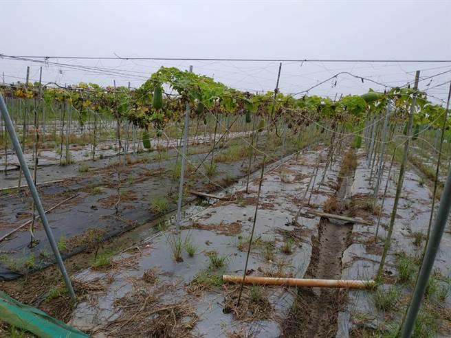 南市連日雨勢造成正值產期的絲瓜泡湯,相關單位今天到現場會勘,將爭取認列。(莊曜聰翻攝)