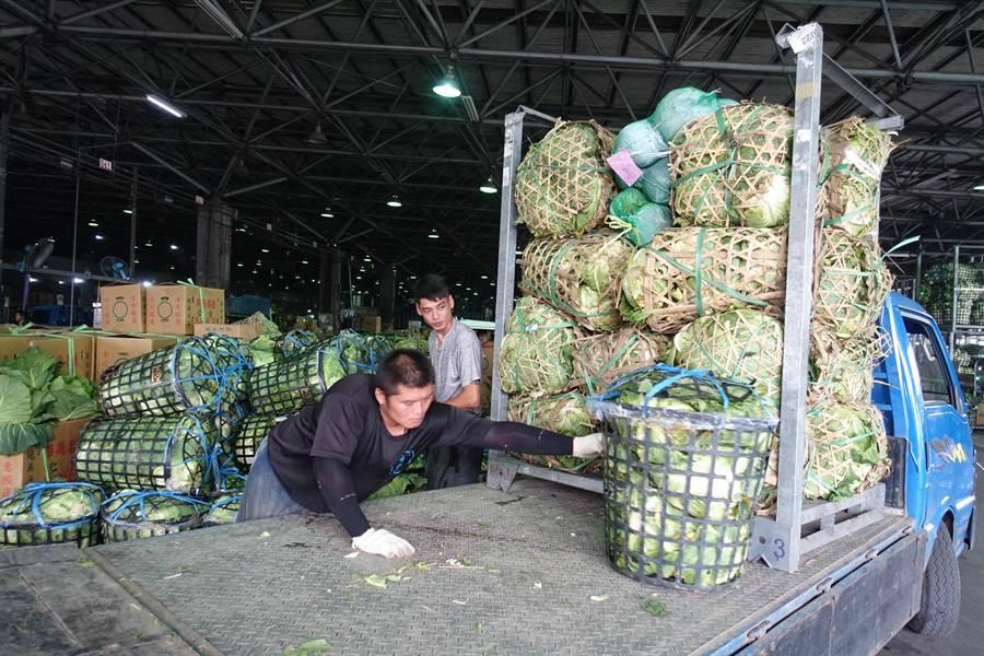 山地的高冷高麗菜到貨量大增25公噸。(周麗蘭攝)