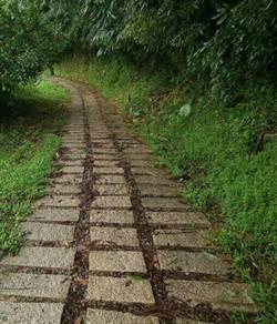 大坑登山步道豪雨造成損壞  市府陸續搶修