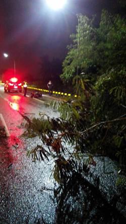 18歲騎士遭路樹壓死 南市府:提供法律協助