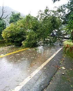 奧萬大遊樂區處處林木倒伏 樹枝斷落26日將再休園一天