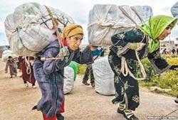 摩洛哥騾女 忍辱負重100公斤