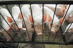 陸全球搶購 巴西豬價飆1年新高