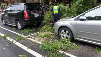 颱風遠離 龜山倒樹阻路警籲行車小心