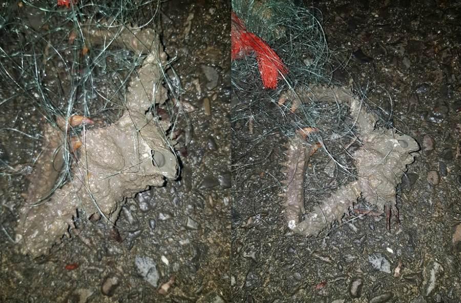 野生蟹如岩石 內行人:有毒別吃(圖/ 翻攝自臉書@爆系知識家)