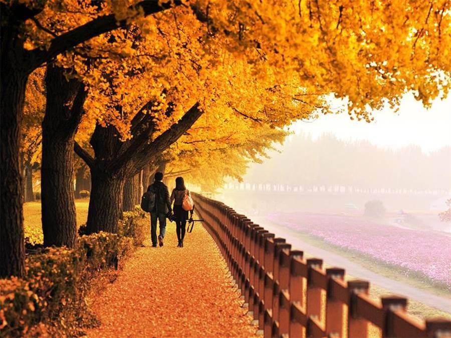 雄獅旅行社也推出多種萬元有找的韓國遊程。(取自雄獅旅遊官網)