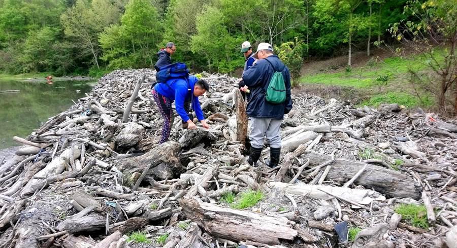 ▲颱風過後,林管處籲請民眾切勿任意撿拾漂流木,以免觸犯森林法。(林管處提供)