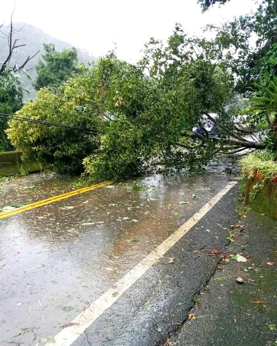 ▲奧萬大森林遊樂區聯外道路,處處樹倒橫臥馬路,阻礙交通。(林管處提供)