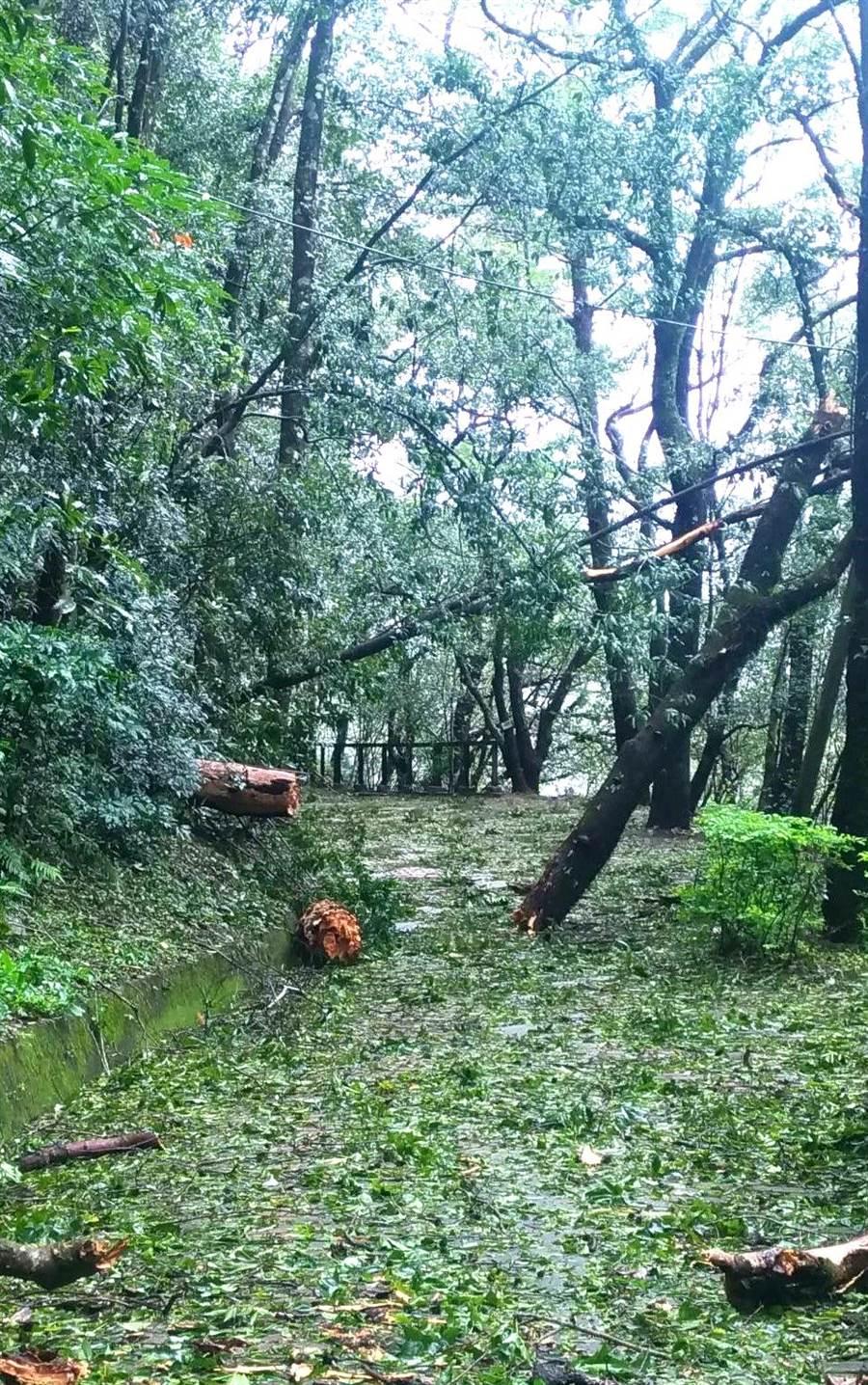 ▲奧萬大森林遊樂區的園區內也是到處林木倒伏,樹枝斷落,亟待全面清理整修。(林管處提供)
