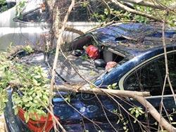 樹倒毀名車 藝人嗆柯看到沒
